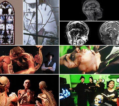 Anatomija i umetnost